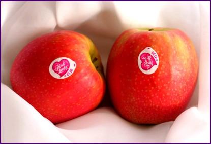 Pink Lady, Yovana Comins (6)
